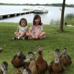 River Shannon-Cruising-Lough Ree